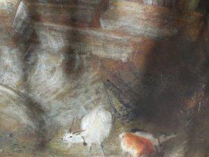 Turner goats