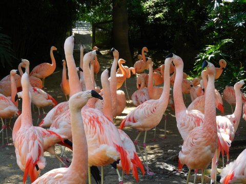 LA zoo flamingo gallery goers